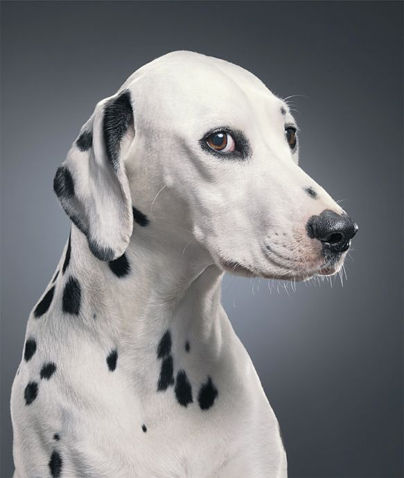 Dog Photos Tim Flach