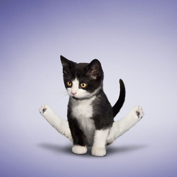 Yoga for animals