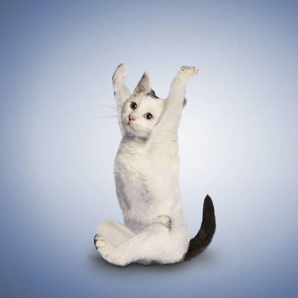 Yoga for animals