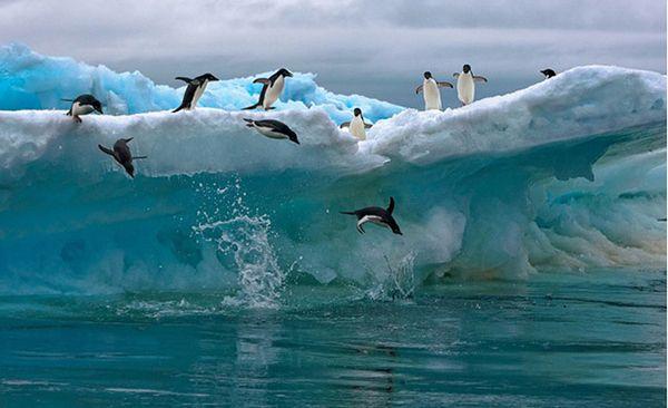 Michael Poliza-penguen