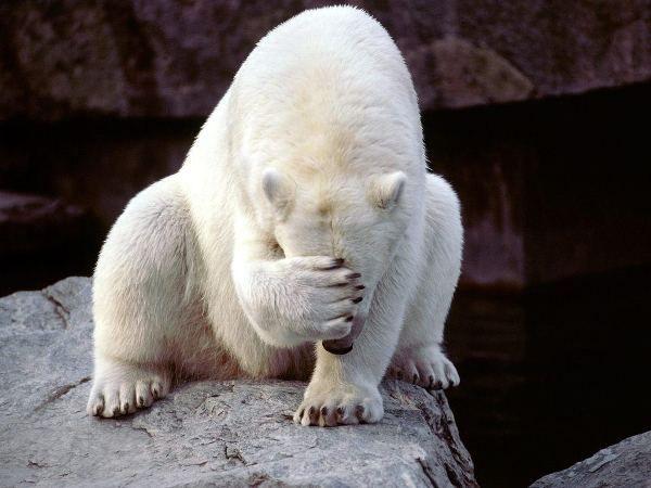 Polar Bear-02