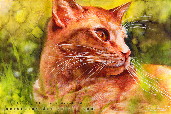 Ηλιόλουστες Γάτες από την Aurora Wienhold