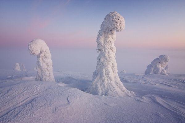 Φωτογραφίες Παγωμένων Δέντρων σε Θερμοκρασία Υπό το Μηδέν