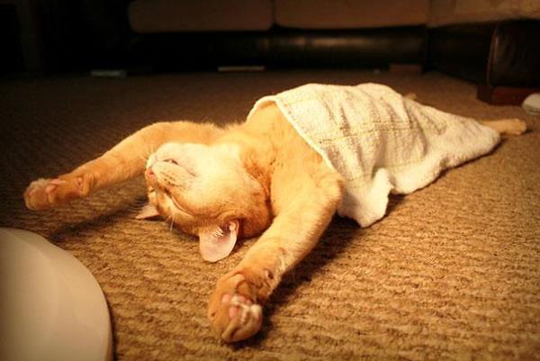 Γάτες που έχουν Κατακτήσει την Τέχνη του Sleep Fu