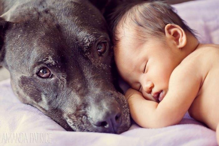 Μεγάλα Σκυλιά Προσέχουν Μικρά Παιδιά