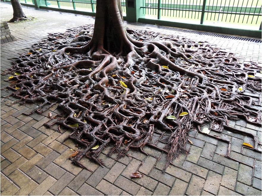 η φύση έχει νικήσει τον πολιτισμό