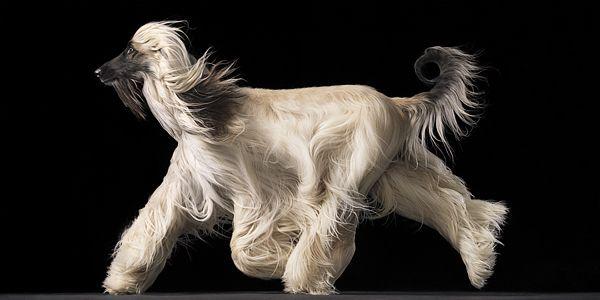 Φωτογραφίες Σκύλων Tim Flach