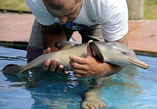 Διάσωση Δελφινιού