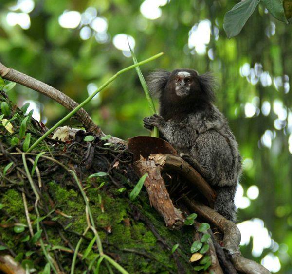 Νέα Είδη του Αμαζονίου