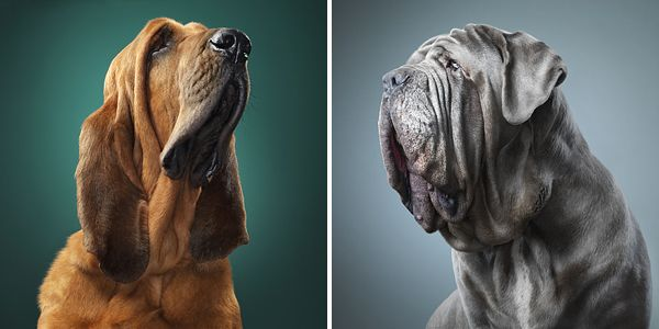 Dog Photos Tim Flach