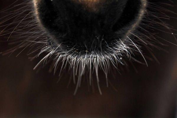 Εικόνες από Ζώα