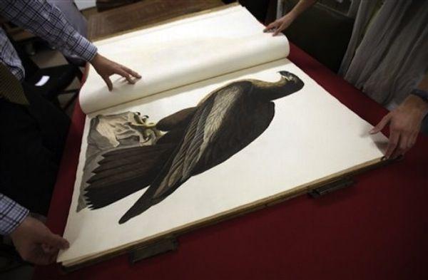 Birds of America
