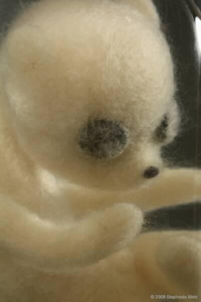 Teddy Bears Stephanie Metz