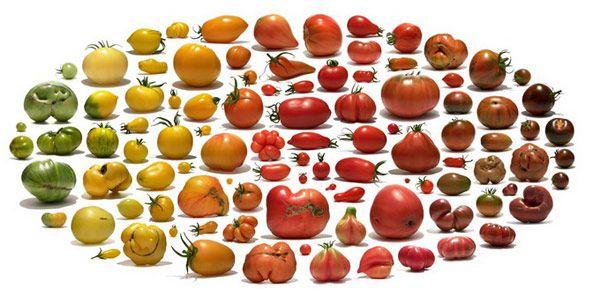 Μεταλλαγμένα Λαχανικά Uli Westphal