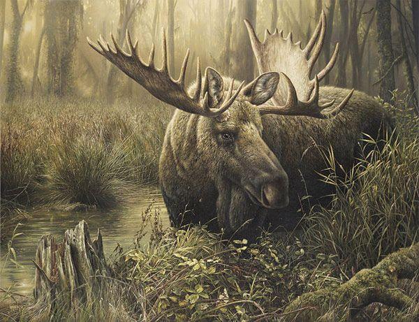 Πίνακες Denis Mayer Jr.