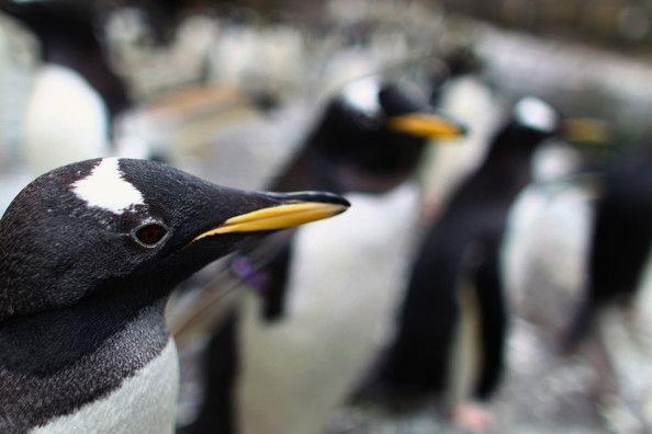 Πρόγραμμα Κατοικίας για Πιγκουίνους