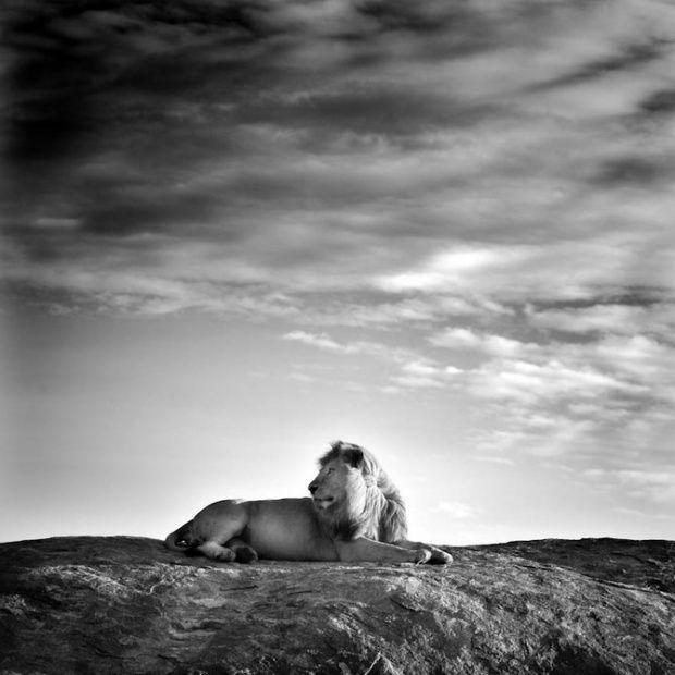 Φωτογράφος άγριας φύσης Laurent Baheux