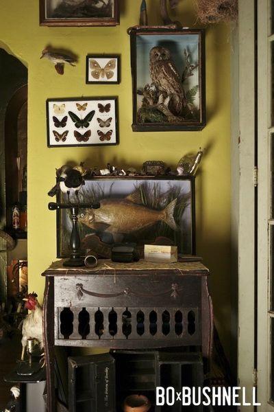 Home Kunstkammer Nacho