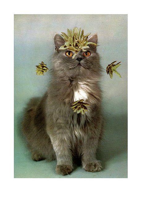 Κολάζ με γάτες από τον Stephen Eichhorn