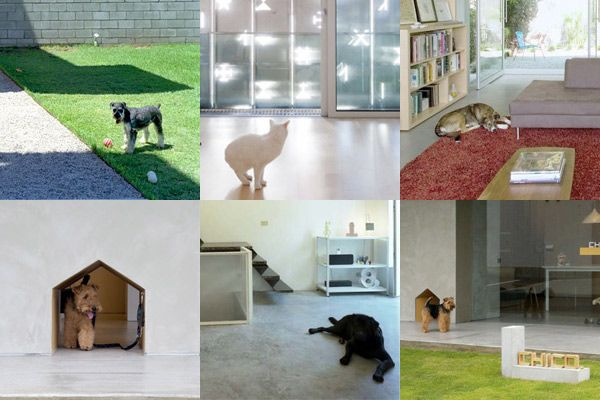 Animals in the Architecture