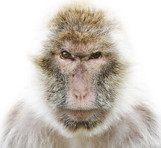 Animals Morten Koldby
