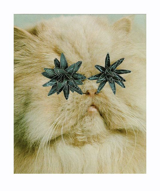 Collages with cats Stephen Eichhorn