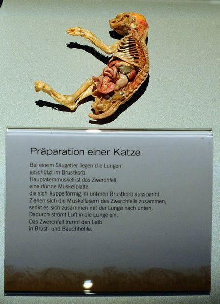 Gunther von Hagens exhibition in Cologne