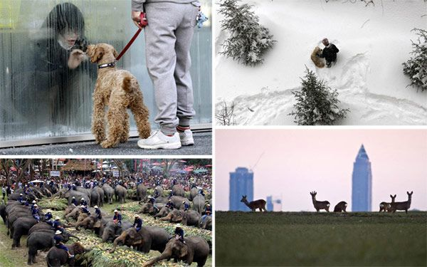 Pictures of the Week - Animals