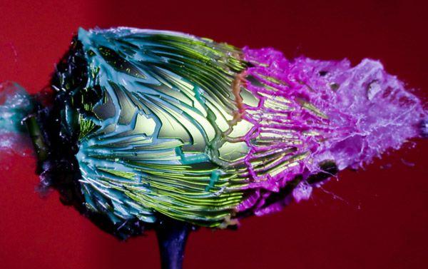 Φωτογράφηση υψηλής ταχύτητας του Alan Sailer