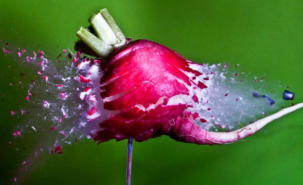 High-speed photography Alan Sailer
