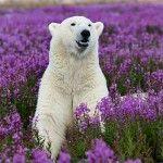 Michael Poliza-white-bear