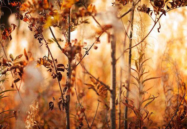 Landscapes by Alexandre Deschaumes-04