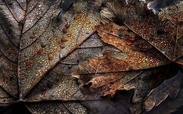 Landscapes by Alexandre Deschaumes-06
