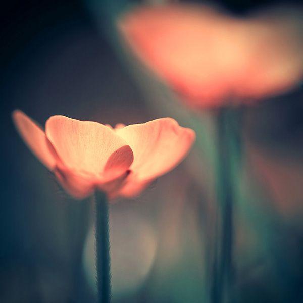 Beautiful Art Photos by Iwona Drozda-Sibeijn-02