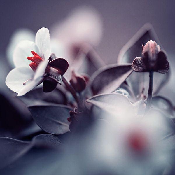 Beautiful Art Photos by Iwona Drozda-Sibeijn-general