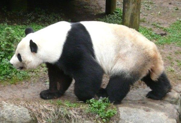Panta Bear-02