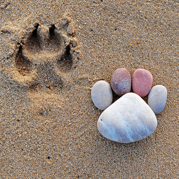 Stone Footprints by Iain Blake-15