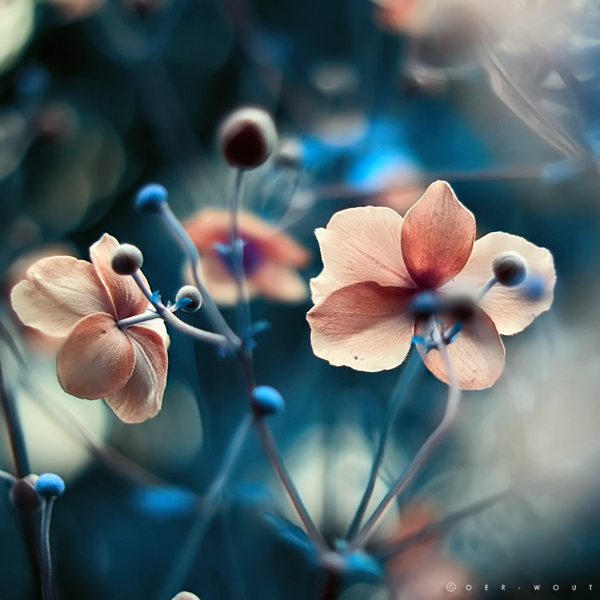 """Beautiful """"Flower Love"""" Photos by Oer-Wout-02"""