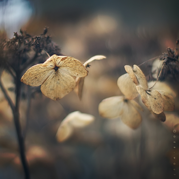 """Beautiful """"Flower Love"""" Photos by Oer-Wout-03"""