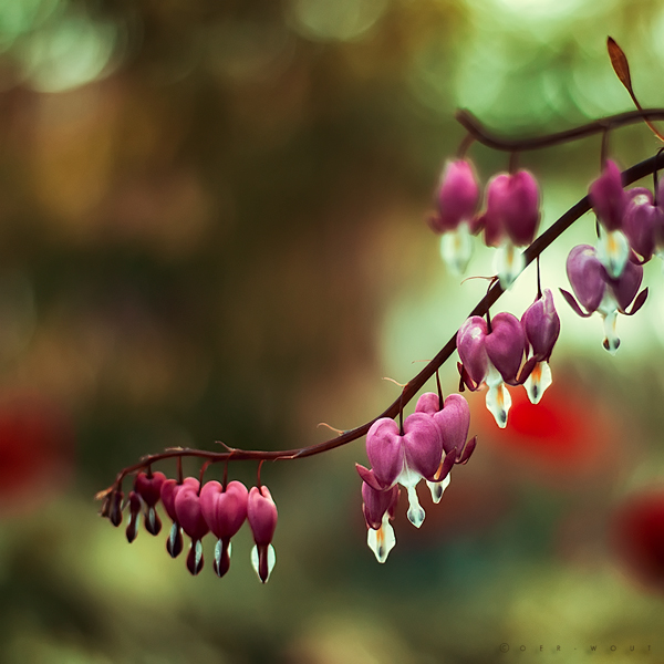 """Beautiful """"Flower Love"""" Photos by Oer-Wout-08"""