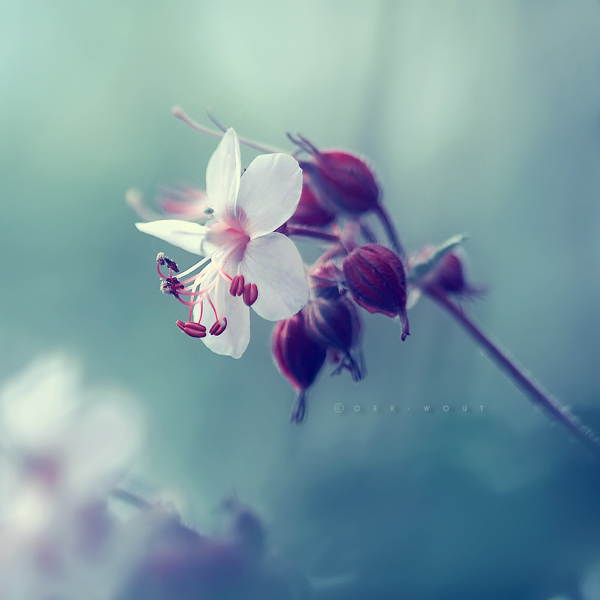 """Beautiful """"Flower Love"""" Photos by Oer-Wout-10"""