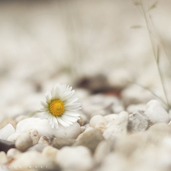 """Beautiful """"Flower Love"""" Photos by Oer-Wout-14"""