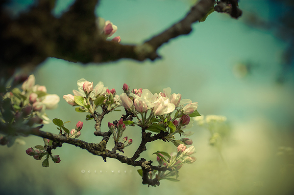 """Beautiful """"Flower Love"""" Photos by Oer-Wout-17"""