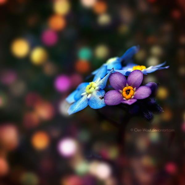 """Beautiful """"Flower Love"""" Photos by Oer-Wout-19"""