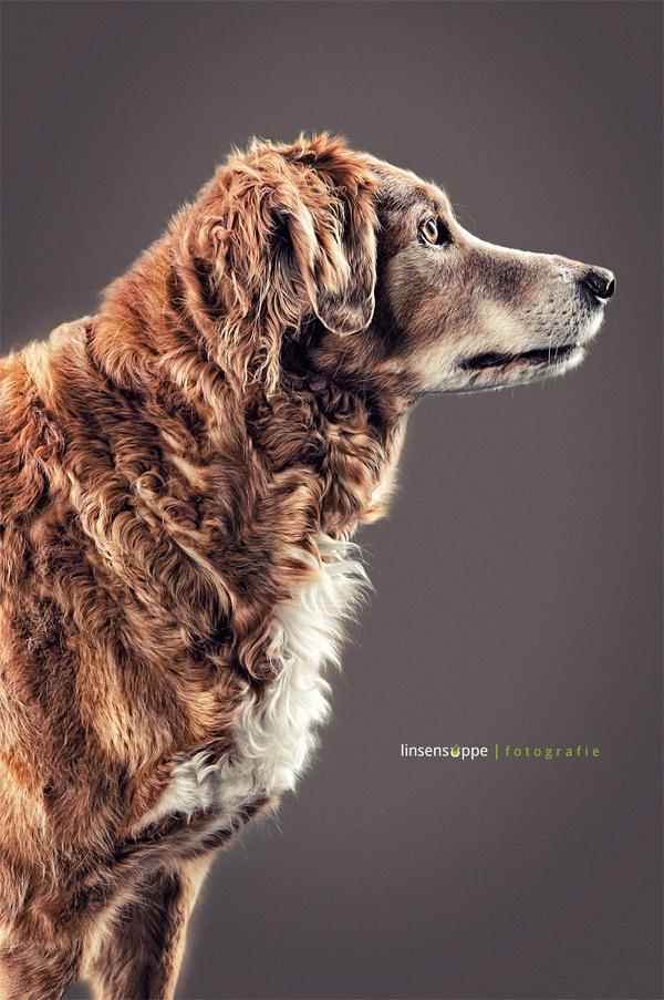 Φανταστικά Πορτραίτα Σκύλων από τον Daniel Sadlowski