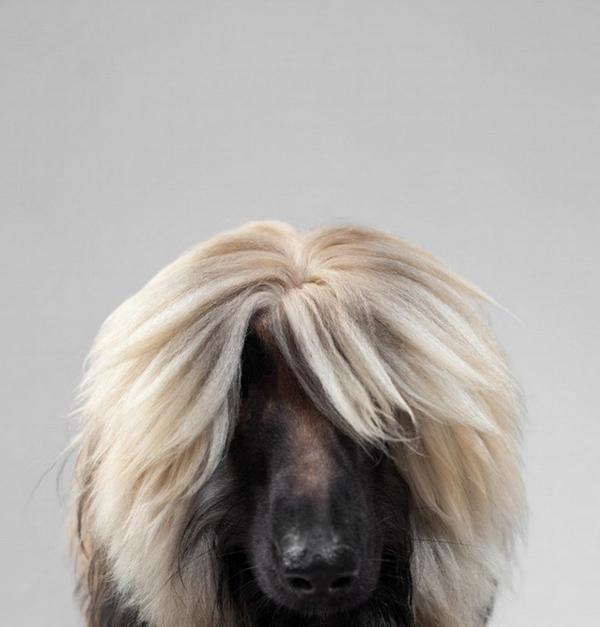 Πορτραίτα Σκύλων από τον Gerrard Charles Gethings