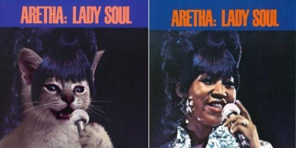 Αγαπημένα Album Art, αλλά με Γατάκια 09