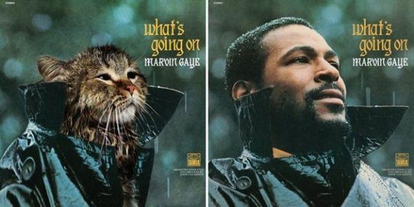 Αγαπημένα Album Art, αλλά με Γατάκια 11