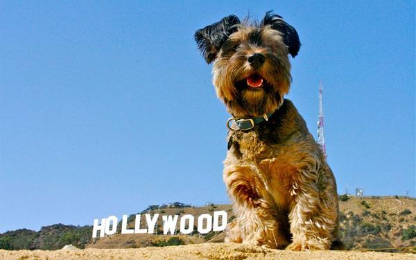 Ο Oscar Ταξιδεύει σε όλο τον Κόσμο 10
