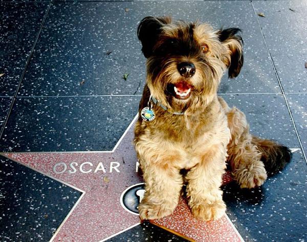 Ο Oscar Ταξιδεύει σε όλο τον Κόσμο 11